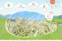福島の米農家 カトウファーム